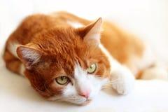Stående av katten fotografering för bildbyråer