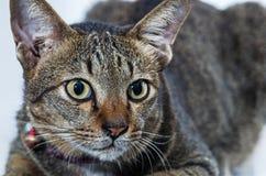 Stående av katten royaltyfria bilder