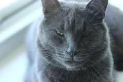 Stående av katten Arkivfoton