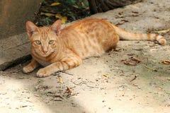 Stående av katten, gullig skönhetkatt royaltyfria foton