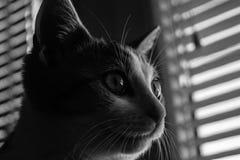 Stående av katten i svartvitt royaltyfria foton