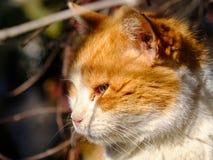 Stående av katten royaltyfria foton