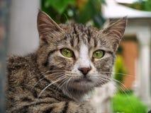 Stående av kattkatten Royaltyfri Foto