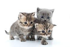 stående av kattungar som tillsammans går Arkivfoton