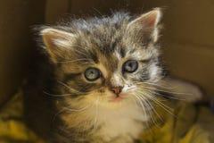 Stående av lite kattungen royaltyfri foto