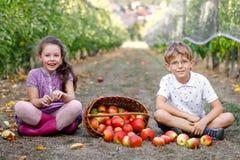 Stående av liten flicka- och ungepojken med röda äpplen i organisk fruktträdgård Lyckligt syskon, barn, syskongrupp fotografering för bildbyråer