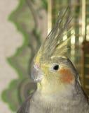 Stående av papegojan Royaltyfri Fotografi