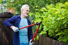 Stående av trädgårdsmästaren för hög man som beskär en häck royaltyfri foto