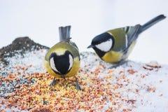 stående av tre gulliga fågelmesar i parkerasammanträdet på en filial Arkivfoton