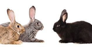 Stående av tre kaniner arkivbilder