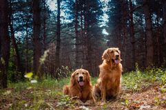 Stående av två hundkapplöpning Arkivbild
