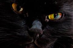 Stående av tysta ned av en svart katt Arkivbilder