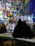 Stående Cat Black royaltyfria bilder