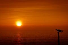Stående fågel och Goa, Indien solnedgång Arkivbild