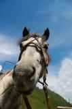 stående för 01 häst Arkivbild