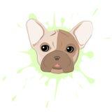 stående för fokus för bulldoggdof-ögon grund fransk royaltyfri illustrationer