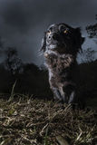 stående för svart hund arkivbilder