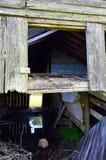 Stående vatten för Louisiana ladugårdotta 08 Arkivbild