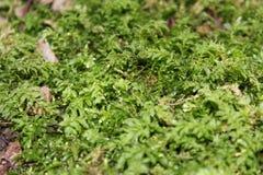 Ståendebild av små växter Arkivfoto