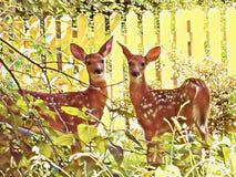Ståendeillustration för två prickig ung hjortar arkivfoton