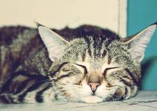 Ståenden av brunt gjorde randig katten som sover på den vit knäckte bränningen Arkivbild