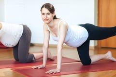 Ståenden av den unga gravida konditionmodellen i sportswearen som gör yoga eller pilates som utbildar, ko poserar, Bitilasana, as Royaltyfri Fotografi