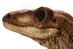 Ståenden av en dinosaurie kallade velociraptoren på vit bakgrund royaltyfri foto