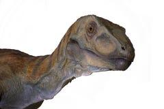 Ståenden av en dinosaurie kallade velociraptoren på vit bakgrund arkivbild