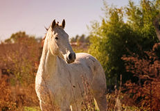 Ståenden av en häst frigör på ett fält i Argentina arkivbilder