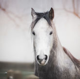 Ståenden av ett hästhuvud med en vit tystar ned royaltyfri foto