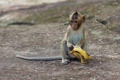 Ståenden av gulligt behandla som ett barn apan som äter bananen Arkivfoto