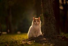 Ståenden av katten som sitter vid ett träd i en trädgård i en grön stad, parkerar på en grön bakgrund som är bakbelyst från solen royaltyfri bild