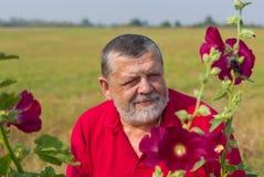 Ståenden av pensionären uppsökte mannen som beundrar den lösa malvaen, blommar på den soliga dagen royaltyfri foto