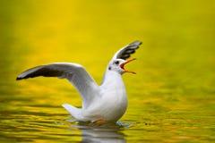 Seagull på laken Royaltyfria Foton