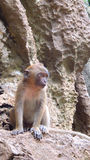 ståenden klibbar det lösa djurlivet för temat Arkivfoton