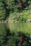 Ståendeskogen reflekterade totalt i en lugna sjö Royaltyfri Fotografi