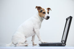 Stålar russell som är mer terier med anteckningsboken Fotografering för Bildbyråer