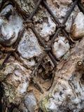 Stålsätta staketet som är ingrown in i träd Fotografering för Bildbyråer
