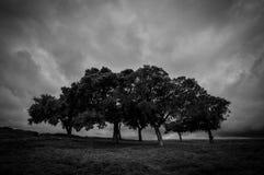Ståndaktigt i stormen Arkivfoto