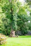 STÅNDSMÄSSIGA OFFALY, IRLAND - AUGUSTI 23, 2017: Birrslottträdgårdar i ståndsmässiga Offaly, Irland Royaltyfri Fotografi
