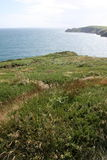 ståndsmässigt irländskt landskap för klippakork arkivfoton