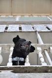 Stång för krage för kedja för hus för hundhuvud Arkivbilder