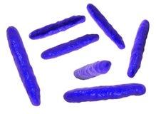 Stång-formade highly-detaled bakterier Arkivbilder