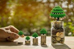 Stången för manhandmynt och kruset och träd på trätabellen i solljus- och suddighetsbakgrund framlägger besparingmynten royaltyfria foton