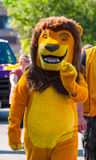 Ståta lejonet Royaltyfri Fotografi