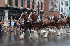 Ståta på Broadway i Nashville, Tennessee Arkivbild