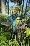 ståta papegojan royaltyfria bilder
