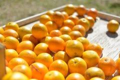 Walencja pomarańcze stół Fotografia Stock