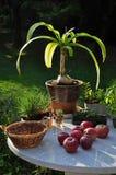 Stół z kwiatami i czerwieni jabłkami w ranku w ogródzie zdjęcia stock