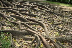 stöd rotar treen Fotografering för Bildbyråer